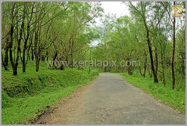 PMDY_013_keralapix.com_ponmudi_keral