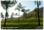 PCM_037_DSC0099-2_ Mattupetty_Munnar_www.keralapix.com