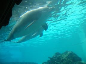 276 - Delfines.JPG