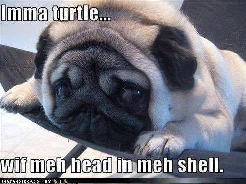 Turtle Pug
