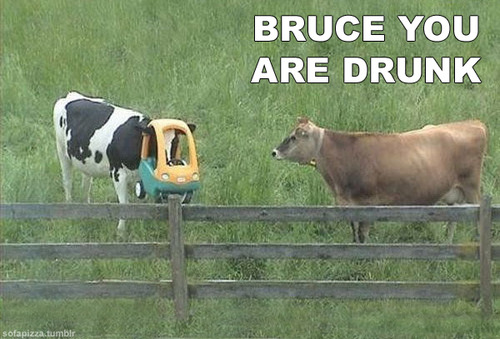 Bruce You Are Drunk Cow