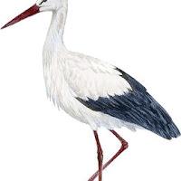 Aves (55).jpg