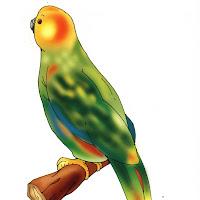 Aves (88).jpg