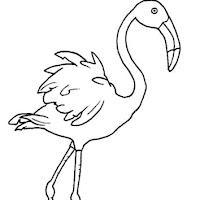Aves (38).jpg