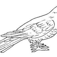 Aves (23).jpg