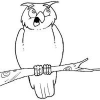 Aves (66).JPG