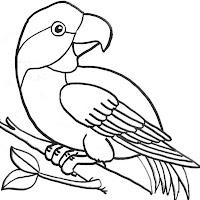 Aves (24).jpg