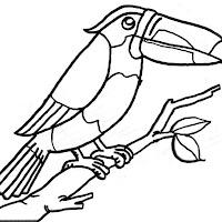Aves (25).jpg