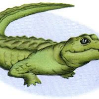 Reptiles (12).jpg