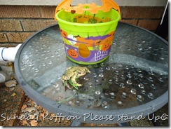 Suicide Frog