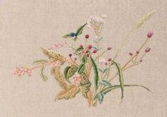 Reynoutria Japonica