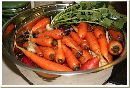 carrot-parsnip-harvest - sustainable eats