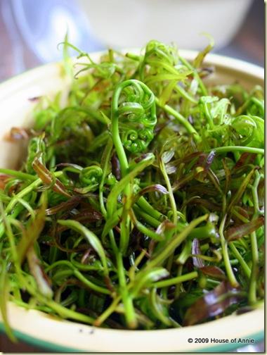 leafy midin (fiddlehead fern)