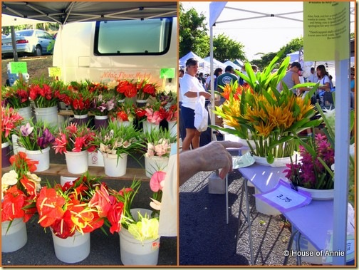 Kcc Farmers' Market flowers anthuriums ginger