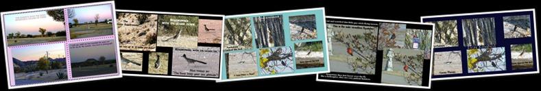 View Lajitas Texas Birds
