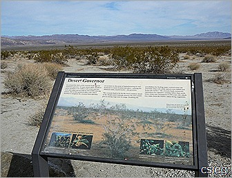 Joshua Tree National Park Trip  (17)