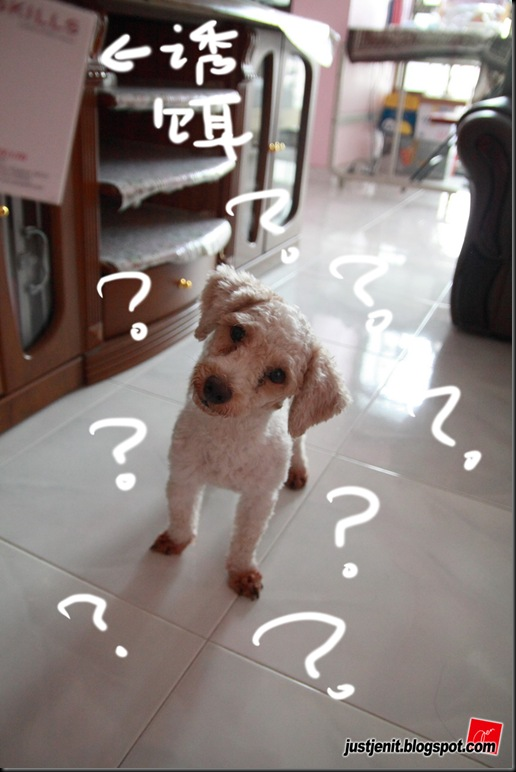 _ Doggie_2009.08.06_0061_resize