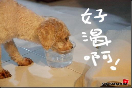 _ Doggie_2009.08.05_0031