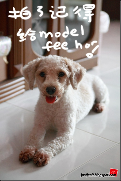_ Doggie_2009.08.06_0068_resize