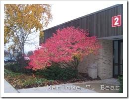 tn_2009-10-26 Burning Bush