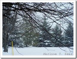 tn_2008-01-27 Snow Day  (2)