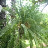 Palmen aller Art