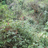 Balkonpflanzen im Urwald