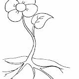 Flores5.jpg
