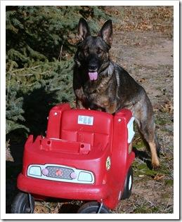 2009.11.17 Dogs in Yard-13