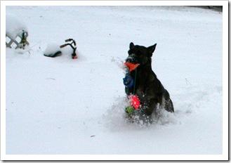 2009.12.9 Blizzard Brita yard (14)
