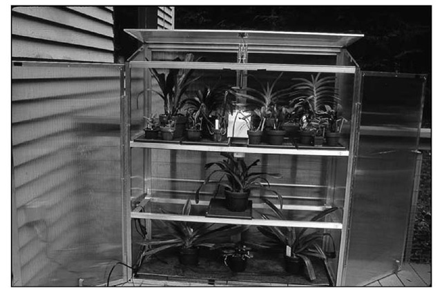 An outdoor portable greenhouse can be an ideal place to put your orchids in the summer.