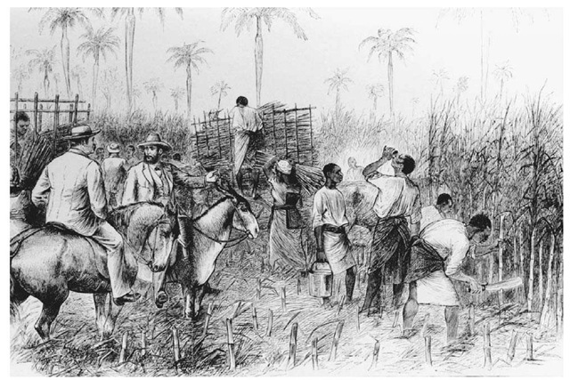 the importance of sugar cane industry in west indies in the 16th century