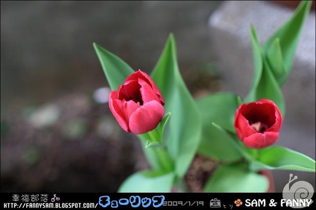 Blog_DPP_0029