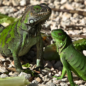 by Jeannette Thalmann-Bendeth - Animals Reptiles