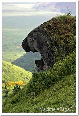 puma de pierre