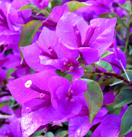 Purple macro crop 1.jpg