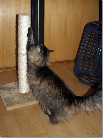 cat scratching post 1