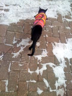 Monty in the snow with his coat - Photo Ruth