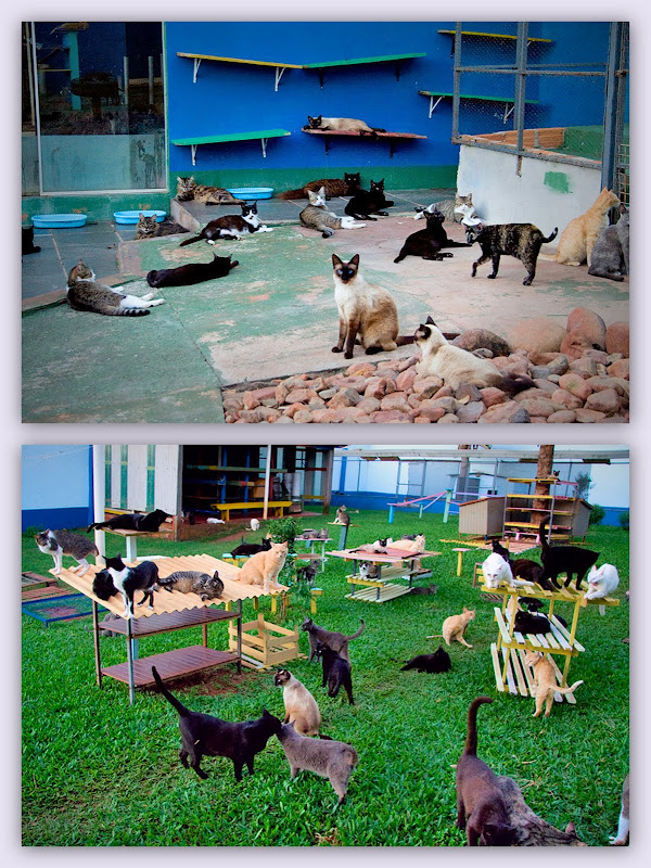 collage of two photos of cats in a sanctuary in Brazil