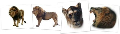 View lion clipart 2