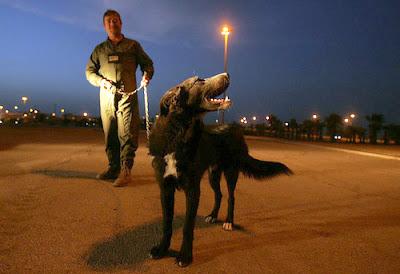 Ratchet in Bagdad