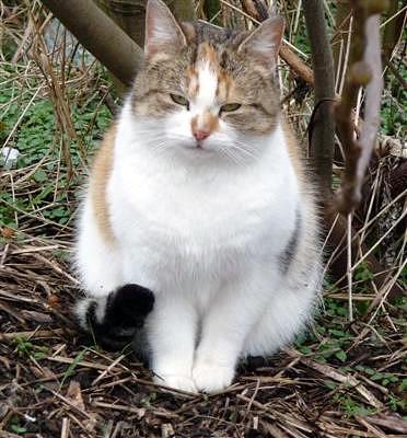 feral cat in Birmingham UK
