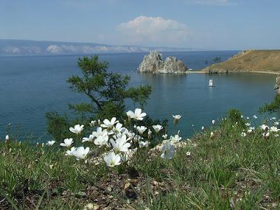 Where pallas's cat lives - On the edges of Lake Baikal