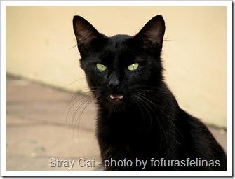 stray cat photo by fofurasfelinas