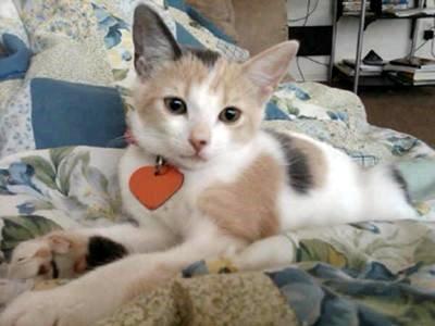 Mimi a moggie cat