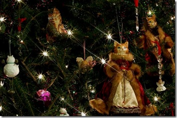 cat christmas wallpaper 11