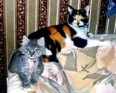 Furby and Lola