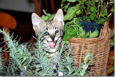 cat-and-herbs
