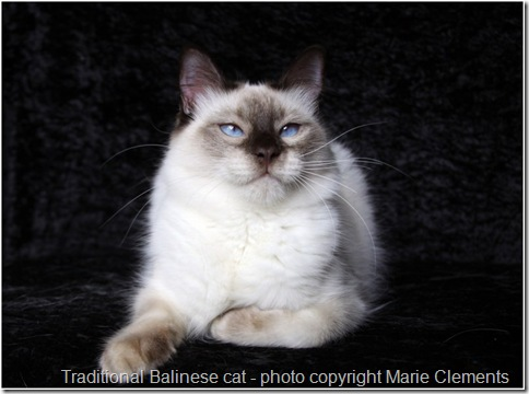 Traditional Balinese cat