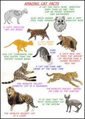 amazing-cat-facts-for-kids